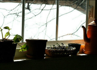 How To: Starting an Indoor Herb Garden