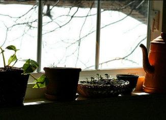 How To: Starting an Indoor Herb Garden
